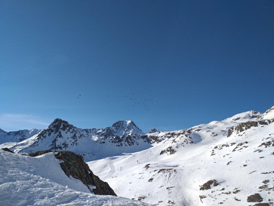 1_jata-ptic-nad-ledenikom_jure_majcen